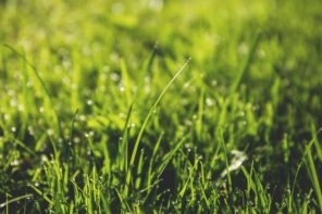 How to Plant the Perfect Lawn – A Step by Step Guide