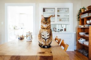 Everything You Should Know Before Getting a Cat