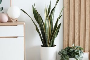 5 Small Additions that Will Make a Big Impact on Your House's Decor